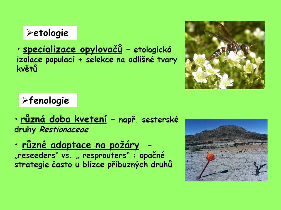  etologie specializace opylovačů – etologická izolace populací + selekce na odlišné tvary květů  fenologie různá doba kvetení – např.