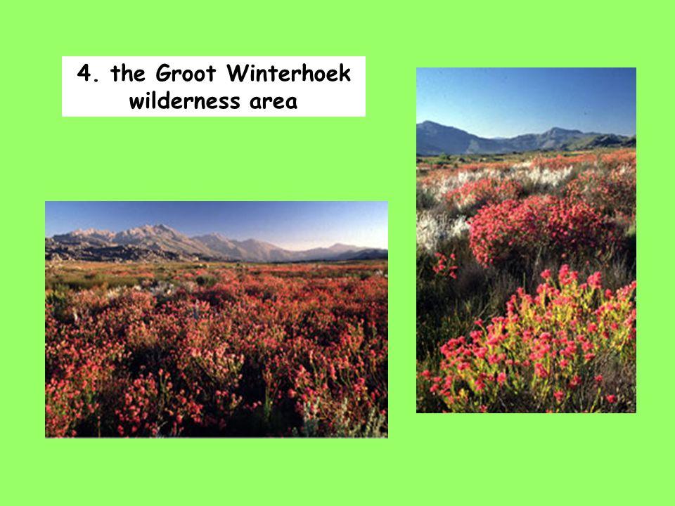 4. the Groot Winterhoek wilderness area