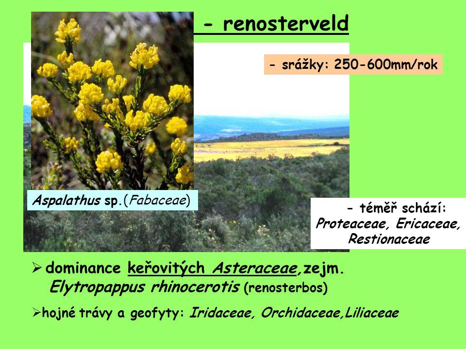 Fynbos - renosterveld - srážky: 250-600mm/rok  dominance keřovitých Asteraceae,zejm. Elytropappus rhinocerotis (renosterbos) - téměř schází: Proteace