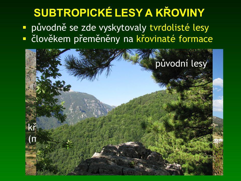 SUBTROPICKÉ LESY A KŘOVINY  původně se zde vyskytovaly tvrdolisté lesy  člověkem přeměněny na křovinaté formace křovinatá formace (macchie) původní