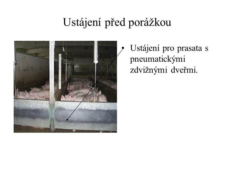 Ustájení před porážkou Ustájení pro prasata s pneumatickými zdvižnými dveřmi.