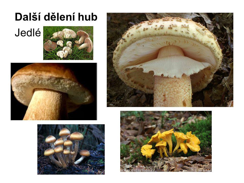 Další dělení hub Jedlé