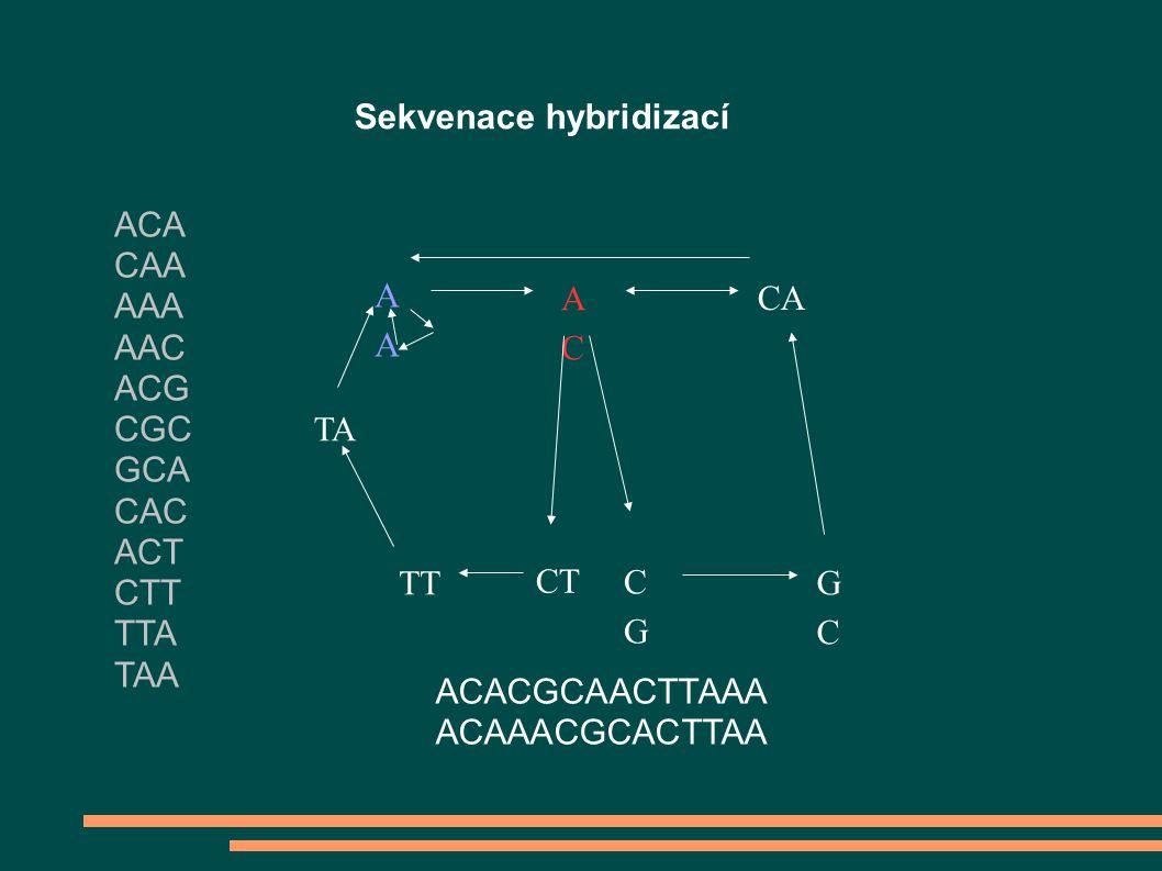 Sekvenace hybridizací A ACAC CA TA TT CT CGCG GCGC ACACGCAACTTAAA ACAAACGCACTTAA ACA CAA AAA AAC ACG CGC GCA CAC ACT CTT TTA TAA