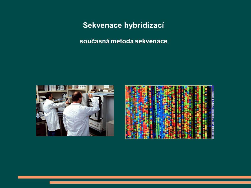 Sekvenace se dělá ve dvou fázích Za použití DNA polymerázy a směsi normálních a modifikovaných deoxyribonukleotidů se syntetizuje vlákno DNA Produkty polymerizace se v automatických strojích chromatograficky dělí podle velikosti a vypovídají o sekvenci Jedna reakce podá informaci o 500-1000 bazích Sekvenace hybridizací současná metoda sekvenace