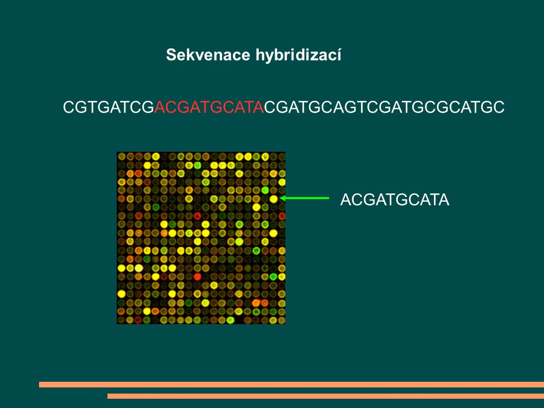 Sekvenace hybridizací ACGATGCATA CGTGATCGACGATGCATACGATGCAGTCGATGCGCATGC