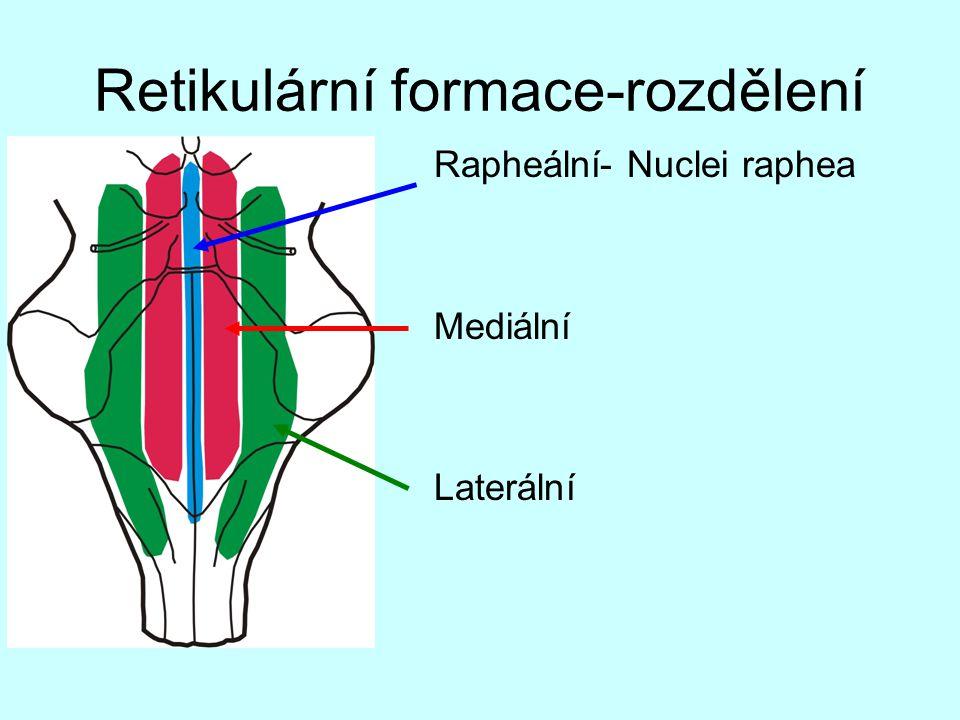 Retikulární formace-rozdělení OBR Rapheální- Nuclei raphea Mediální Laterální