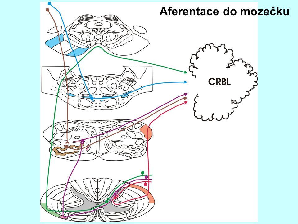 Aferentace do mozečku
