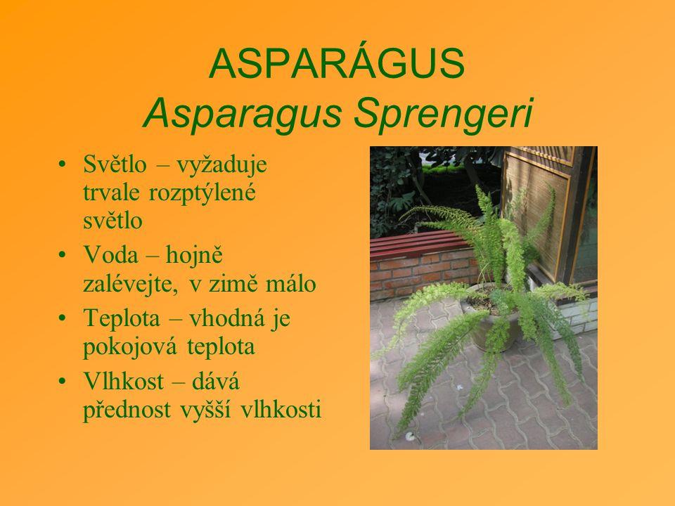 ASPARÁGUS Asparagus Sprengeri Světlo – vyžaduje trvale rozptýlené světlo Voda – hojně zalévejte, v zimě málo Teplota – vhodná je pokojová teplota Vlhk