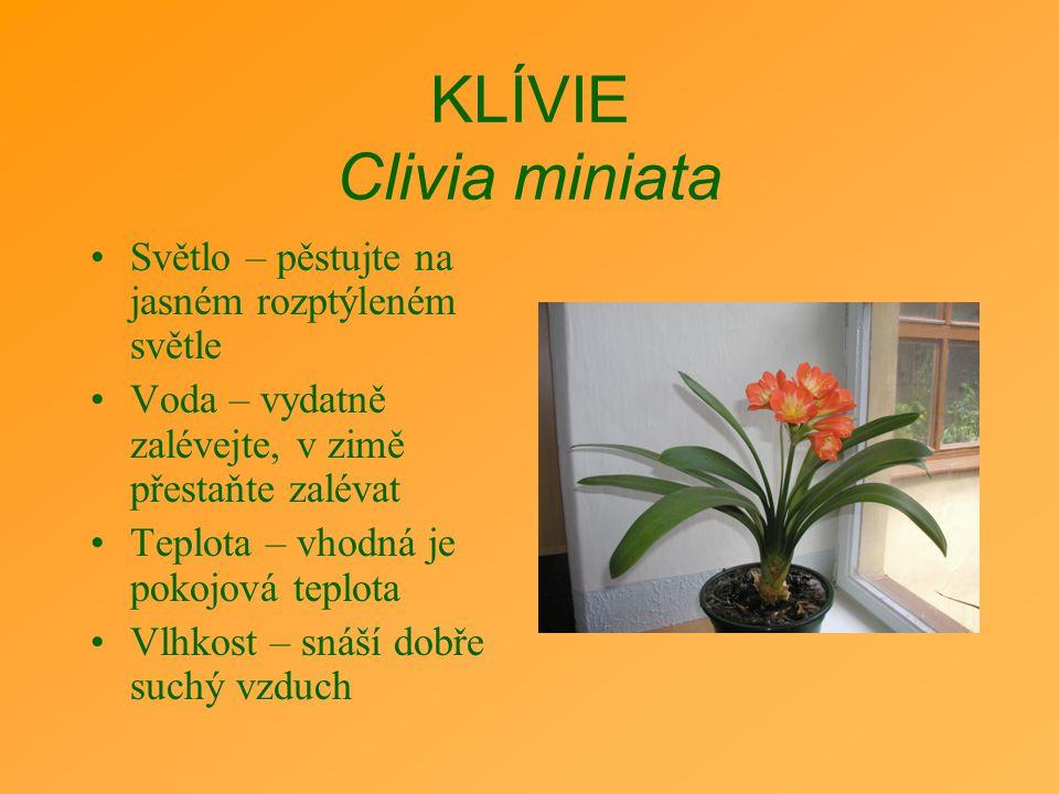 KLÍVIE Clivia miniata Světlo – pěstujte na jasném rozptýleném světle Voda – vydatně zalévejte, v zimě přestaňte zalévat Teplota – vhodná je pokojová t