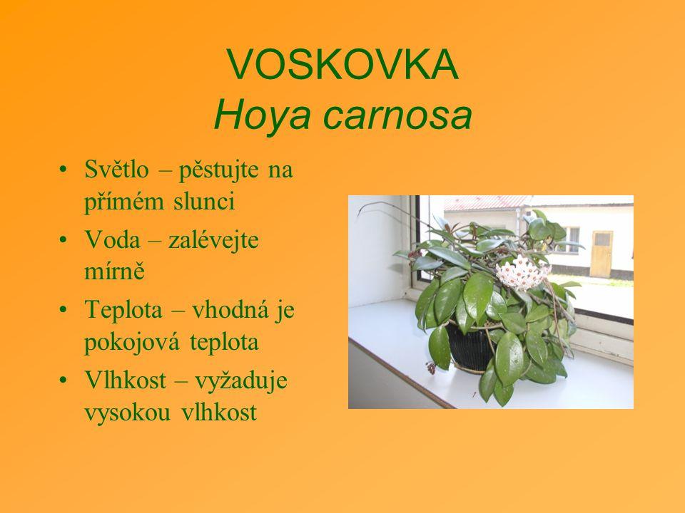 VOSKOVKA Hoya carnosa Světlo – pěstujte na přímém slunci Voda – zalévejte mírně Teplota – vhodná je pokojová teplota Vlhkost – vyžaduje vysokou vlhkos