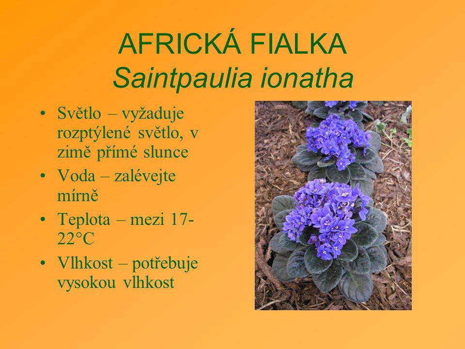 AFRICKÁ FIALKA Saintpaulia ionatha Světlo – vyžaduje rozptýlené světlo, v zimě přímé slunce Voda – zalévejte mírně Teplota – mezi 17- 22°C Vlhkost – p