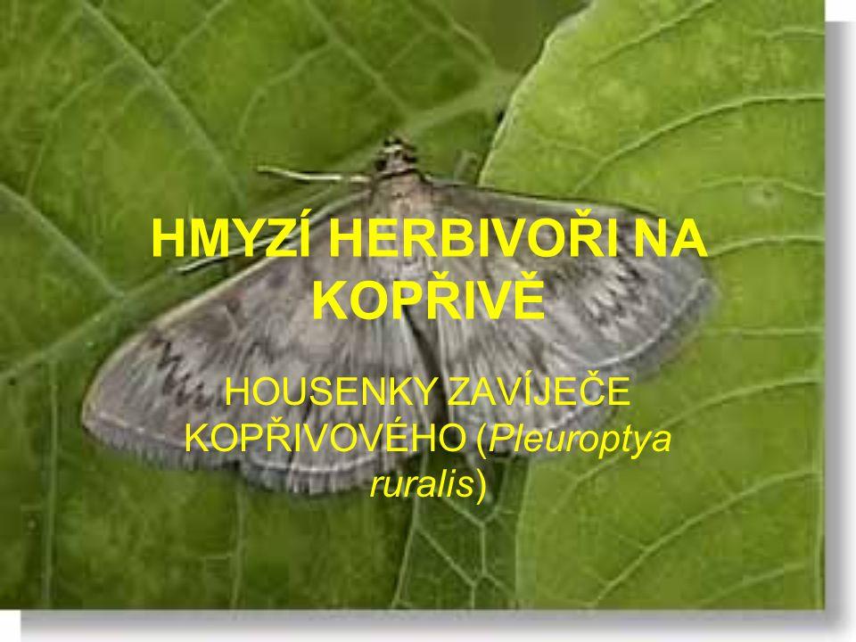 HMYZÍ HERBIVOŘI NA KOPŘIVĚ HOUSENKY ZAVÍJEČE KOPŘIVOVÉHO (Pleuroptya ruralis)