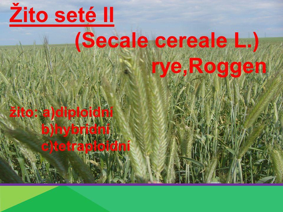 Žito seté II (Secale cereale L.) rye,Roggen žito: a)diploidní b)hybridní c)tetraploidní