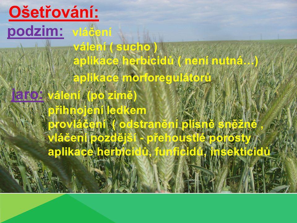 Ošetřování: podzim: vláčení válení ( sucho ) aplikace herbicidů ( není nutná…) aplikace morforegulátorů jaro: válení (po zimě) přihnojení ledkem provláčení ( odstranění plísně sněžné, vláčení pozdější - přehoustlé porosty aplikace herbicidů, funficidů, insekticidů