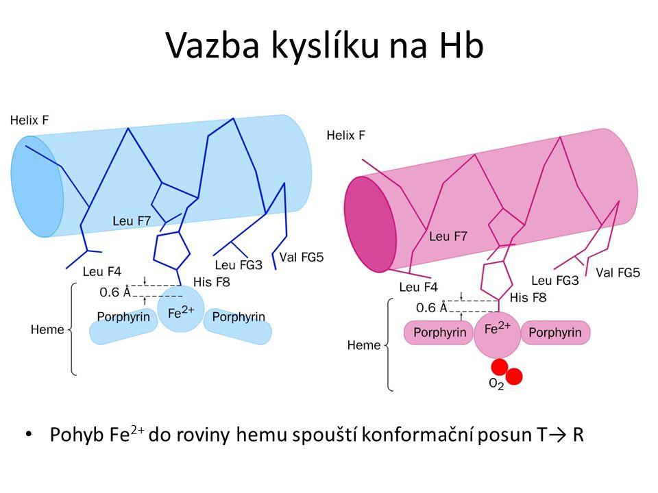 Vazba kyslíku na Hb Pohyb Fe 2+ do roviny hemu spouští konformační posun T→ R