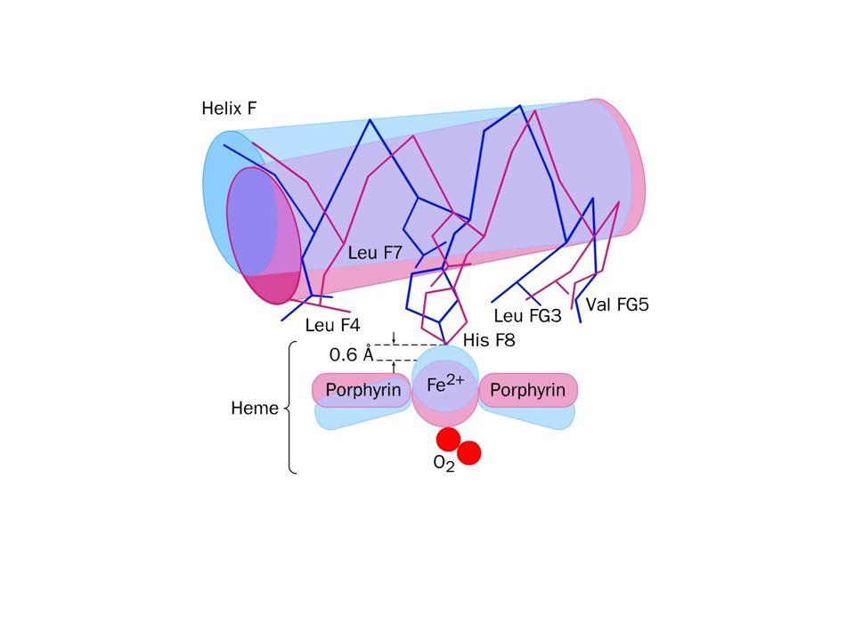 Konformační posun T→R T forma (tense)R forma (relaxed) Navázání O 2 vede k přerušení elektrostatických interakcí mezi podjednotkami