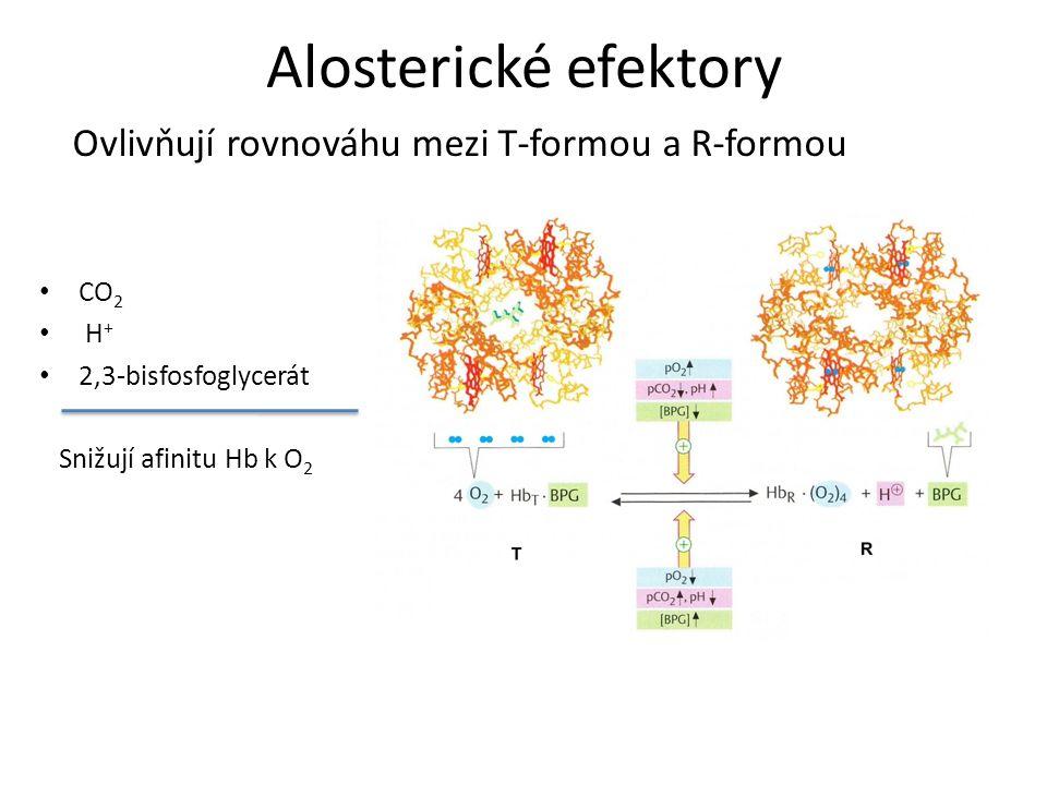 Alosterické efektory CO 2 H + 2,3-bisfosfoglycerát Snižují afinitu Hb k O 2 Ovlivňují rovnováhu mezi T-formou a R-formou