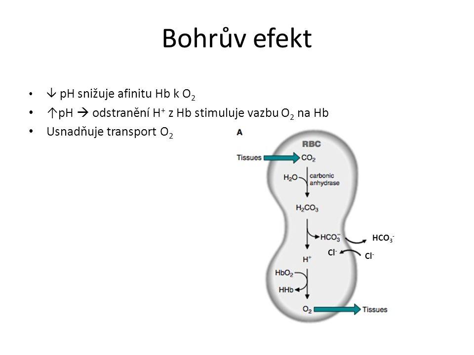 Bohrův efekt  pH snižuje afinitu Hb k O 2 ↑pH  odstranění H + z Hb stimuluje vazbu O 2 na Hb Usnadňuje transport O 2 HCO 3 - Cl -