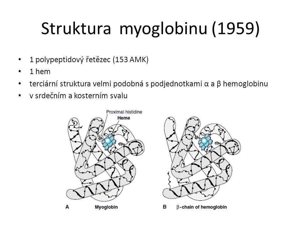 1 polypeptidový řetězec (153 AMK) 1 hem terciární struktura velmi podobná s podjednotkami α a β hemoglobinu v srdečním a kosterním svalu Struktura myoglobinu (1959)