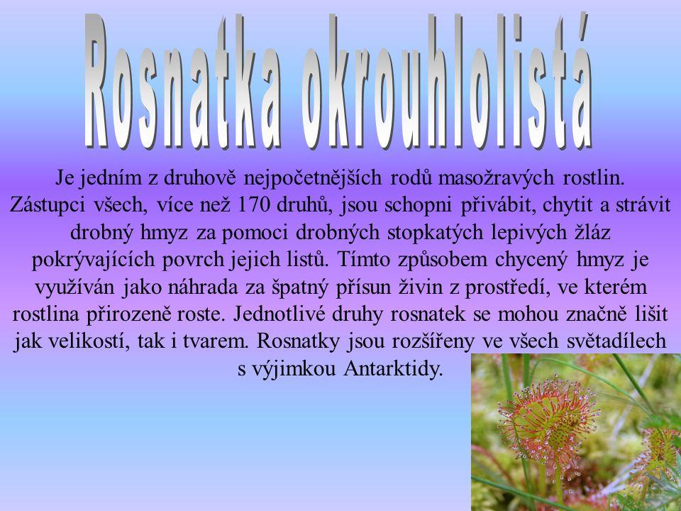 Je jedním z druhově nejpočetnějších rodů masožravých rostlin. Zástupci všech, více než 170 druhů, jsou schopni přivábit, chytit a strávit drobný hmyz