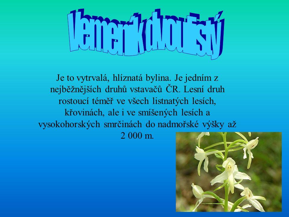 Je to vytrvalá, hlíznatá bylina. Je jedním z nejběžnějších druhů vstavačů ČR. Lesní druh rostoucí téměř ve všech listnatých lesích, křovinách, ale i v