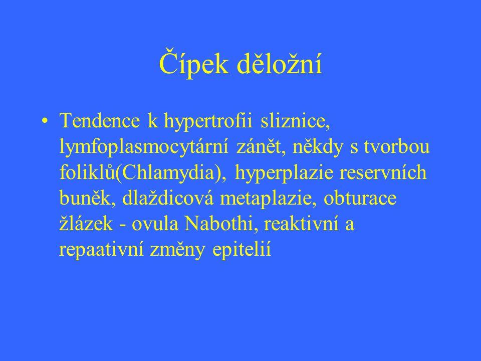 Čípek děložní Tendence k hypertrofii sliznice, lymfoplasmocytární zánět, někdy s tvorbou foliklů(Chlamydia), hyperplazie reservních buněk, dlaždicová