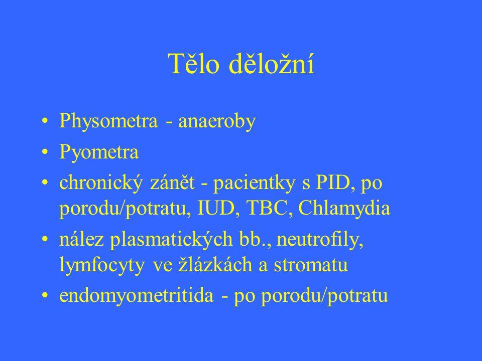 Tělo děložní Physometra - anaeroby Pyometra chronický zánět - pacientky s PID, po porodu/potratu, IUD, TBC, Chlamydia nález plasmatických bb., neutrof