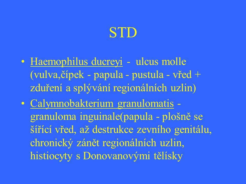 STD Haemophilus ducreyi - ulcus molle (vulva,čípek - papula - pustula - vřed + zduření a splývání regionálních uzlin) Calymnobakterium granulomatis -