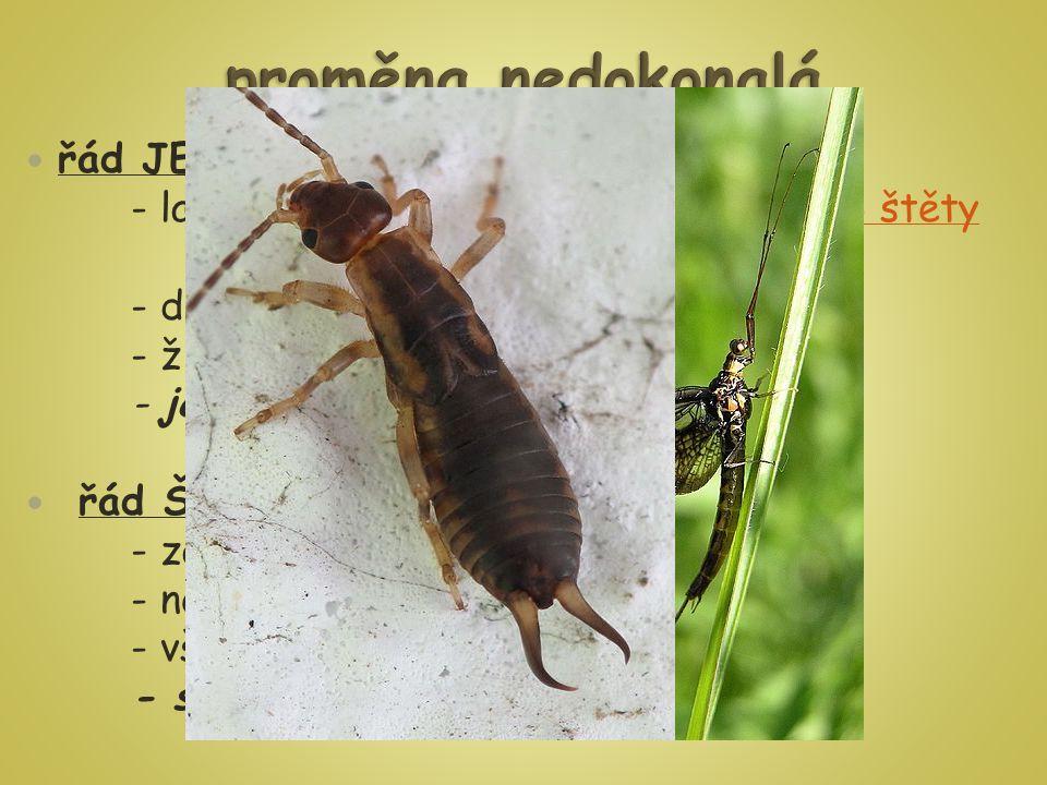 řád JEPICE - larva žije ve vodě až několik let, má 3 štěty na zadečku3 štěty - dospělec nemá vyvinuté ústní ústrojí - žijí asi 48 hod - jepice obecná