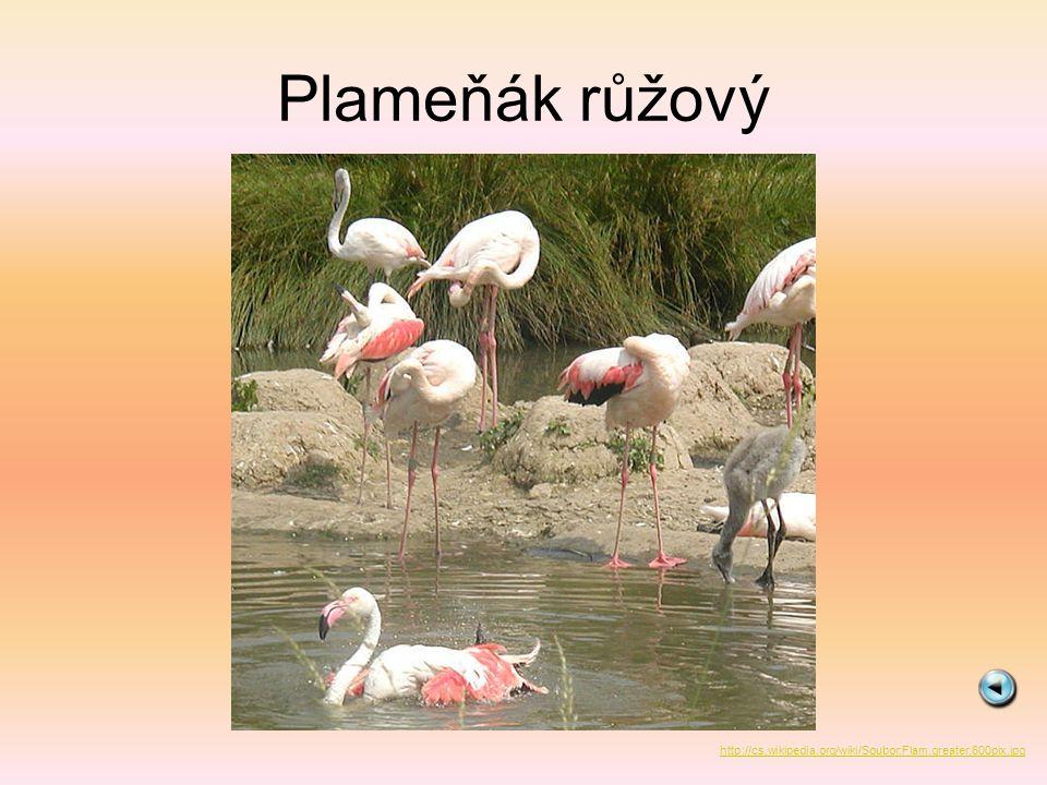 Čáp bílý http://cs.wikipedia.org/wiki/Soubor:White_Stork_%28Ciconia_ciconia%29.jpg