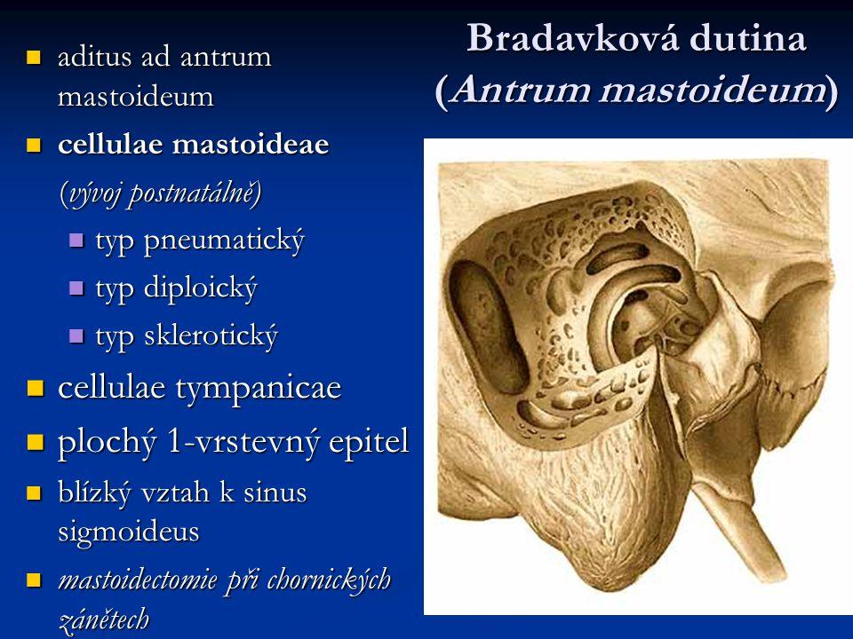Bradavková dutina (Antrum mastoideum) aditus ad antrum mastoideum aditus ad antrum mastoideum cellulae mastoideae cellulae mastoideae (vývoj postnatál