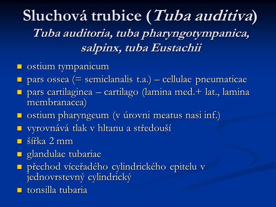 Sluchová trubice (Tuba auditiva) Tuba auditoria, tuba pharyngotympanica, salpinx, tuba Eustachii ostium tympanicum ostium tympanicum pars ossea (= sem