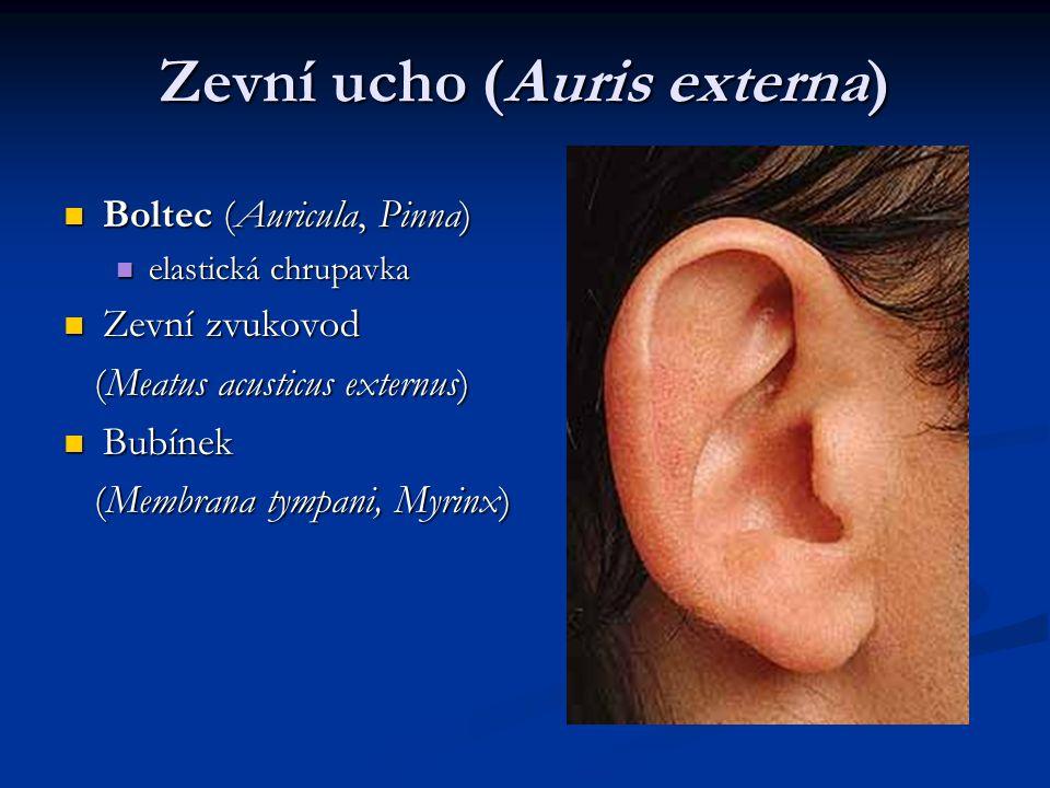 Kostěný labyrint (labyrinhtus osseus) předsíň (vestibulum ) recessus ellipticus (utricularis) recessus ellipticus (utricularis) crista vestibuli (pyramis vestibuli) crista vestibuli (pyramis vestibuli) recessus sphericus (saccularis) recessus sphericus (saccularis) recessus cochlearis recessus cochlearis