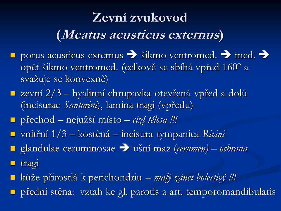 Zevní zvukovod (Meatus acusticus externus) porus acusticus externus  šikmo ventromed.  med.  opět šikmo ventromed. (celkově se sbíhá vpřed 160º a s