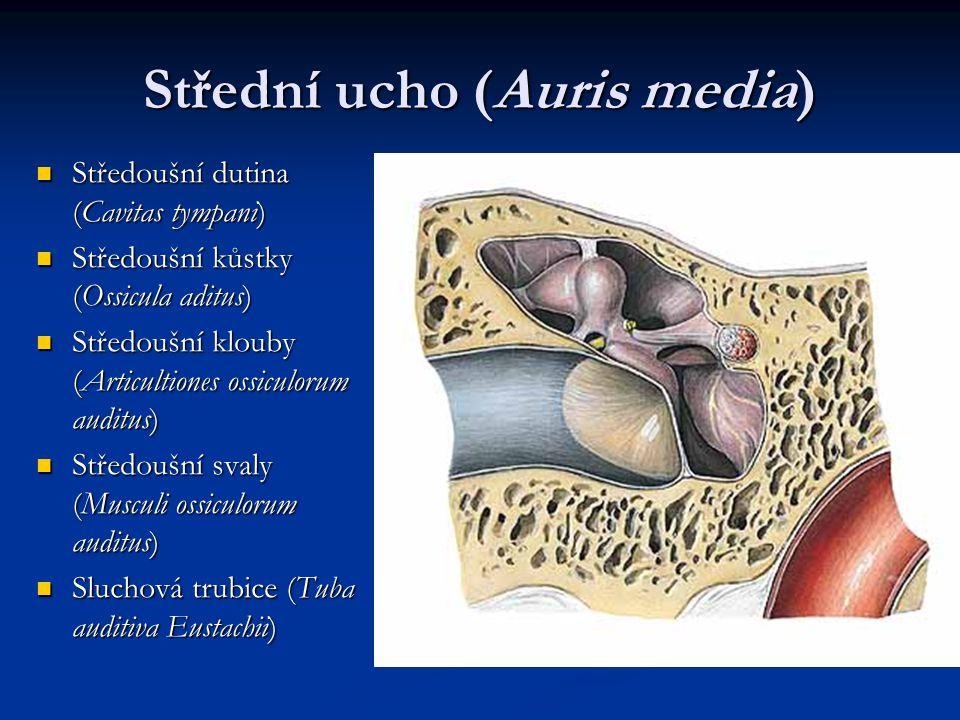 Sluchová trubice (Tuba auditiva) Tuba auditoria, tuba pharyngotympanica, salpinx, tuba Eustachii ostium tympanicum ostium tympanicum pars ossea (= semiclanalis t.a.) – cellulae pneumaticae pars ossea (= semiclanalis t.a.) – cellulae pneumaticae pars cartilaginea – cartilago (lamina med.+ lat., lamina membranacea) pars cartilaginea – cartilago (lamina med.+ lat., lamina membranacea) ostium pharyngeum (v úrovni meatus nasi inf.) ostium pharyngeum (v úrovni meatus nasi inf.) vyrovnává tlak v hltanu a středouší vyrovnává tlak v hltanu a středouší šířka 2 mm šířka 2 mm glandulae tubariae glandulae tubariae přechod víceřadého cylindrického epitelu v jednovrstevný cylindrický přechod víceřadého cylindrického epitelu v jednovrstevný cylindrický tonsilla tubaria tonsilla tubaria