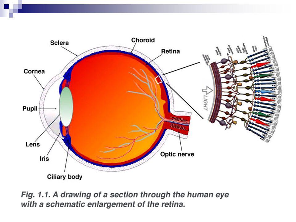 Statokinetické ústrojí součást vnitřního ucha vnímání polohy (tatické čidlo) a pohybu (kinetické čidlo)