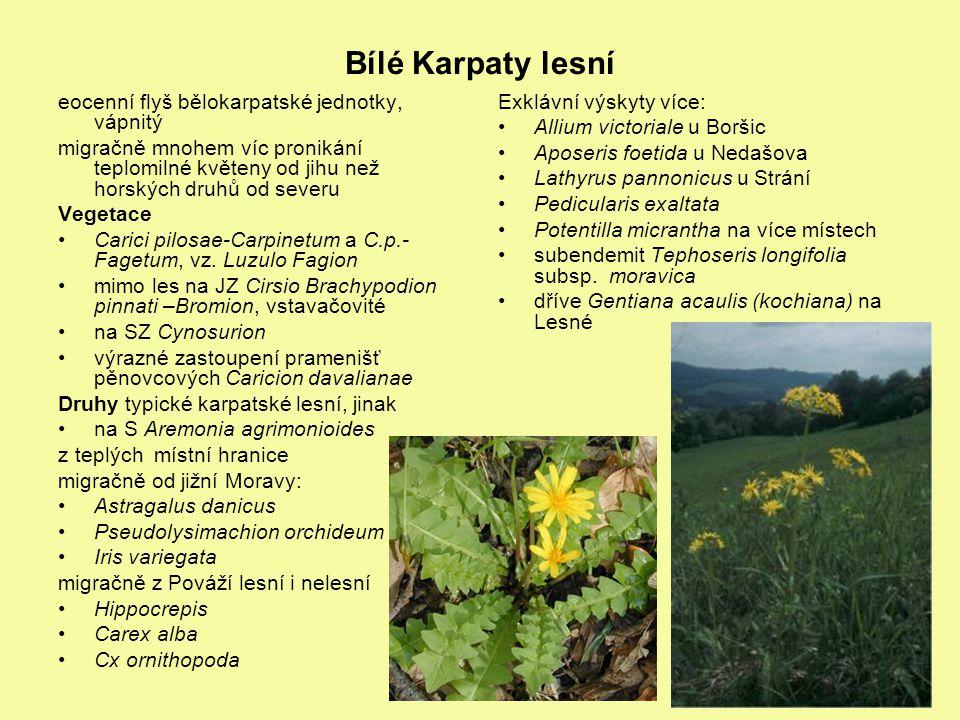 Bílé Karpaty lesní eocenní flyš bělokarpatské jednotky, vápnitý migračně mnohem víc pronikání teplomilné květeny od jihu než horských druhů od severu