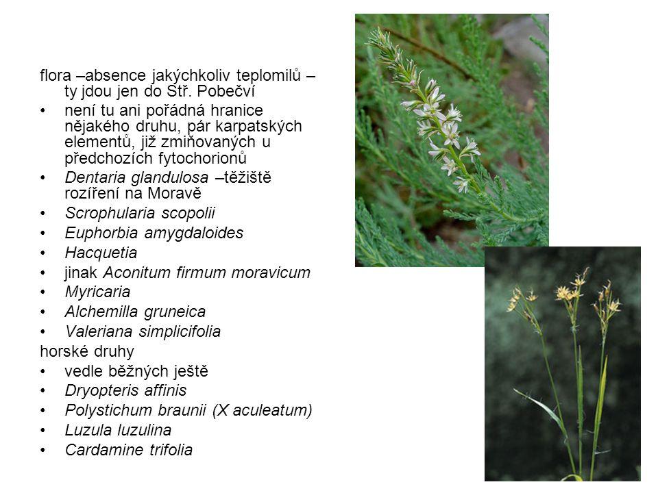flora –absence jakýchkoliv teplomilů – ty jdou jen do Stř. Pobečví není tu ani pořádná hranice nějakého druhu, pár karpatských elementů, již zmiňovaný
