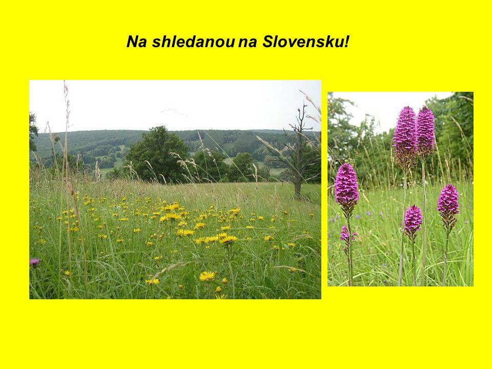 Na shledanou na Slovensku!
