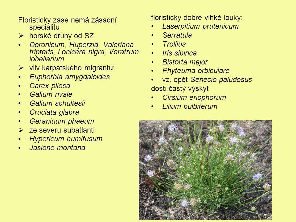 Floristicky zase nemá zásadní specialitu  horské druhy od SZ Doronicum, Huperzia, Valeriana tripteris, Lonicera nigra, Veratrum lobelianum  vliv kar