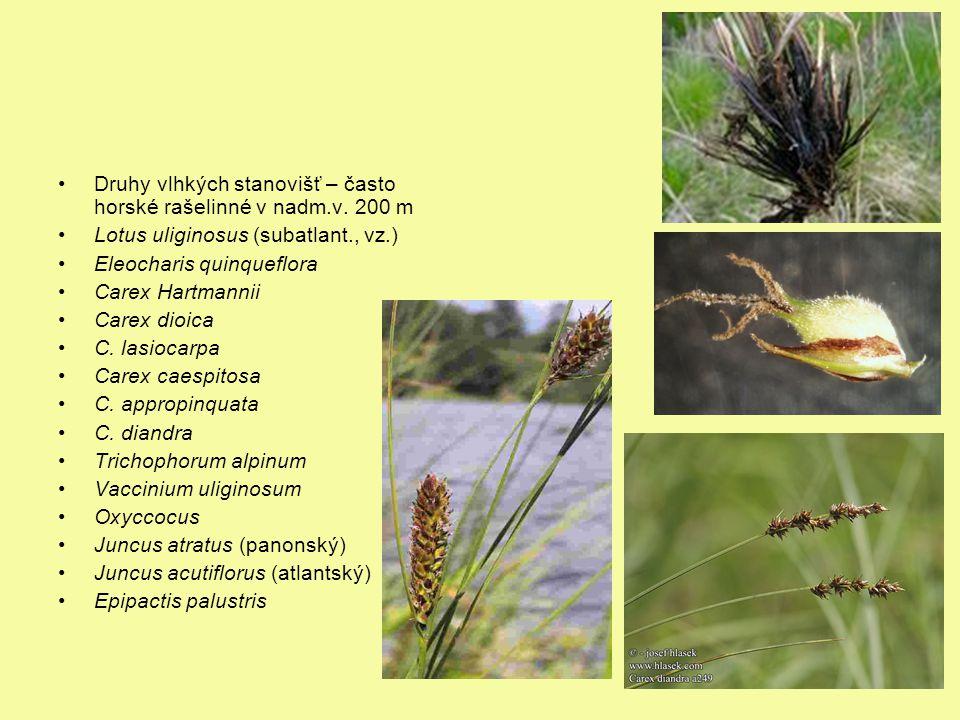 Druhy vlhkých stanovišť – často horské rašelinné v nadm.v. 200 m Lotus uliginosus (subatlant., vz.) Eleocharis quinqueflora Carex Hartmannii Carex dio