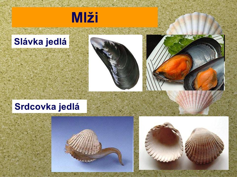 your name Mlži Slávka jedlá Srdcovka jedlá