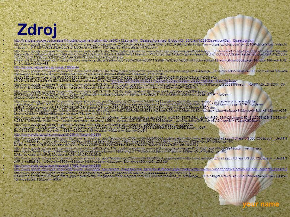 your name Zdroj http://translate.google.cz/translate?hl=cs&langpair=en|cs&u=http://js082.k12.sd.us/My_Classes/Advanced_Biology/Ch_25/Clam%2520Dissecti