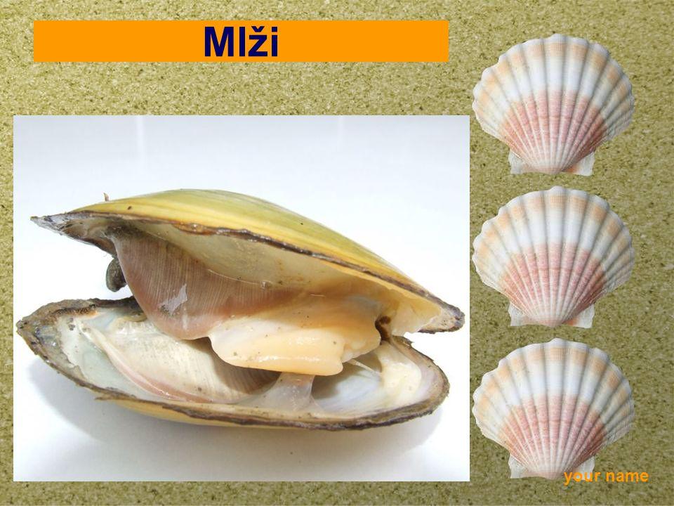 your name Mlži