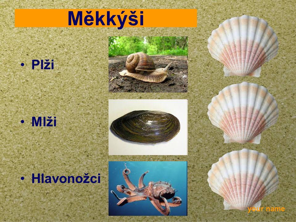 your name Měkkýši Plži Mlži Hlavonožci
