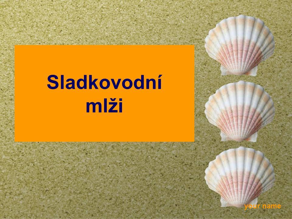 your name Sladkovodní mlži