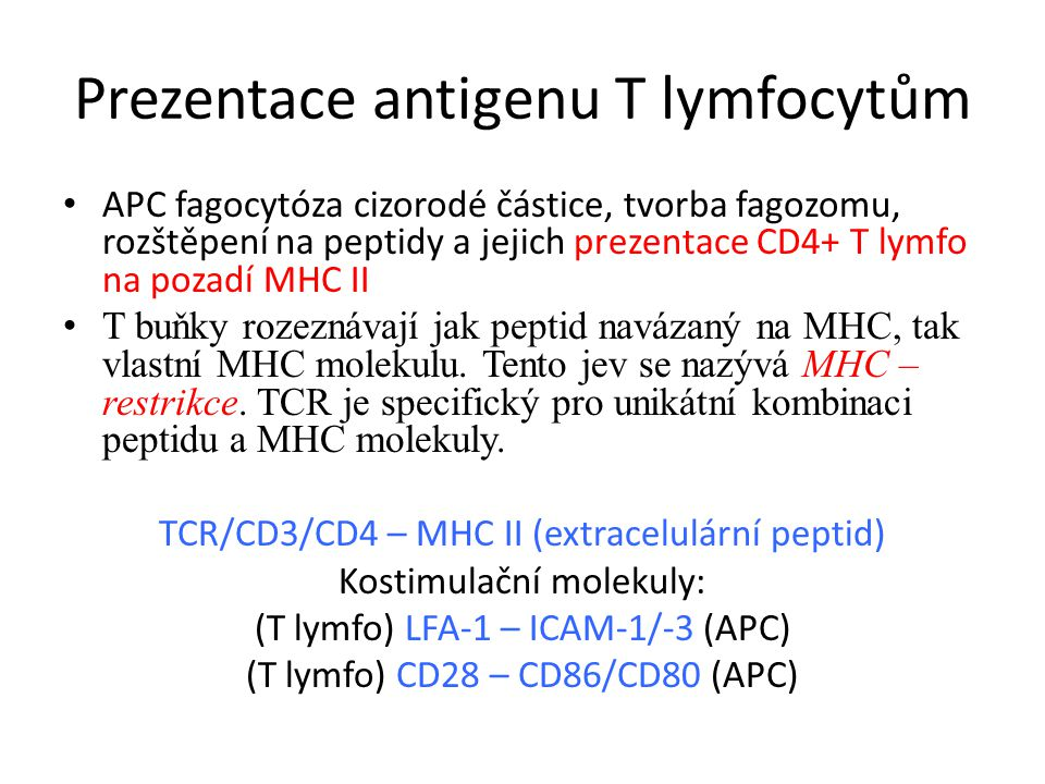 Prezentace antigenu T lymfocytům APC fagocytóza cizorodé částice, tvorba fagozomu, rozštěpení na peptidy a jejich prezentace CD4+ T lymfo na pozadí MHC II T buňky rozeznávají jak peptid navázaný na MHC, tak vlastní MHC molekulu.
