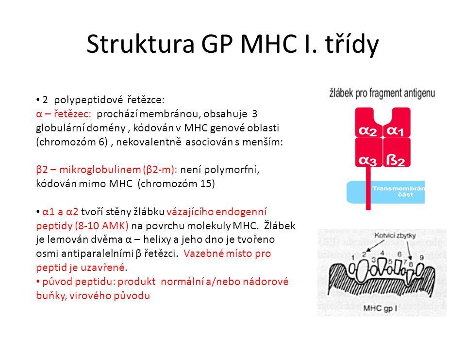 Struktura GP MHC I.