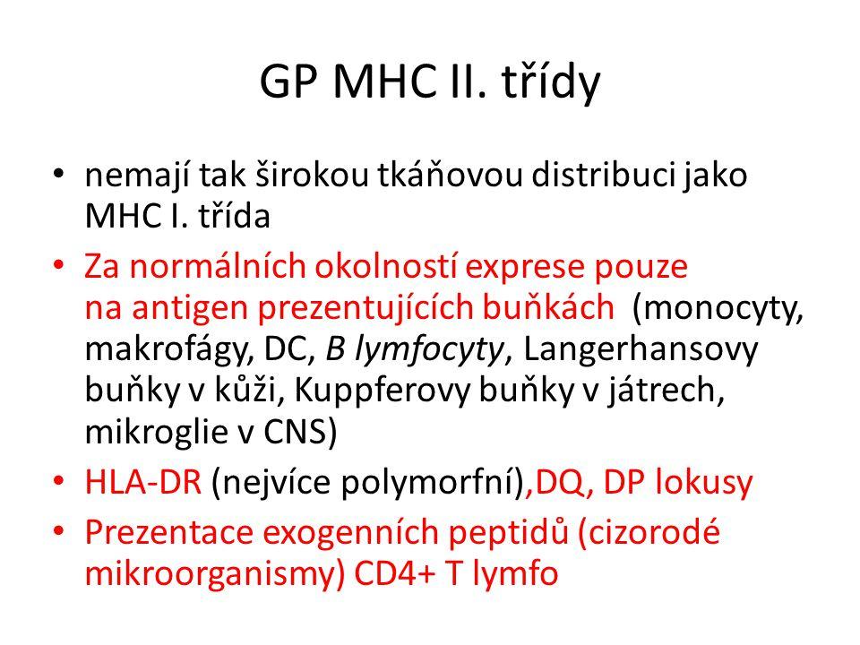 Struktura GP MHC II.
