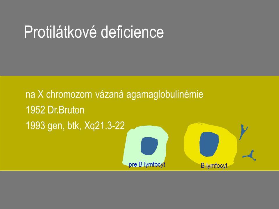 B lymfocyt pre B lymfocyt na X chromozom vázaná agamaglobulinémie 1952 Dr.Bruton 1993 gen, btk, Xq21.3-22 Protilátkové deficience